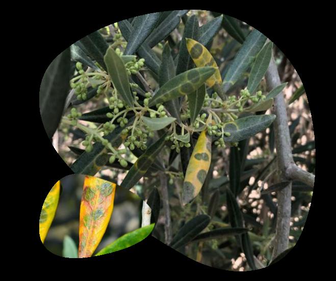 fungicidas pedro guzman castro