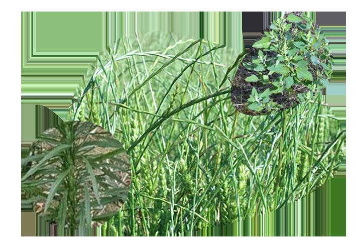 herbicidas pedro guzman